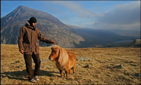 This friendly Shetland pony happily posed for pictures at Cwm Idwal, Ogwen Valley (Pic: Paul Houghoughi)