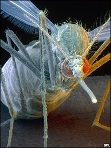Digital image of a mosquito (Image: Science Photo Library)
