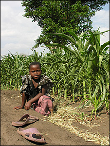 Girl in maize field (Image: BBC)