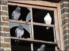 Broken window in dilapidated house