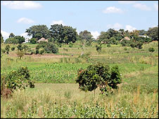 Fields in Kayunga district