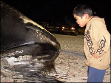 Child looks into whale's mouth in Barrow, Alaska