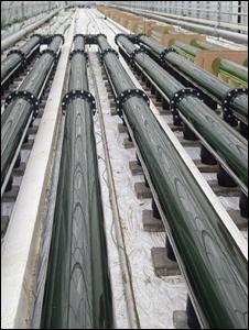 Algal tubes