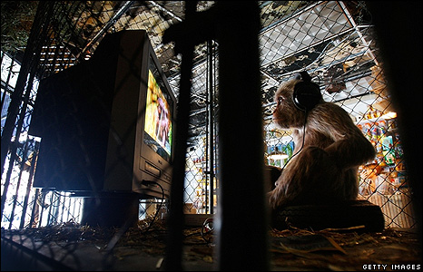 Monkey watching TV