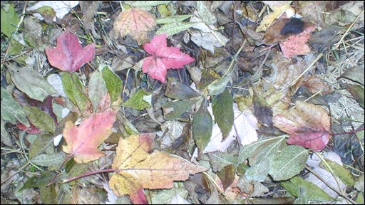 Peter Breene sent in this picture of leaves from Dixon Park in Malone