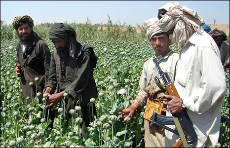 A Taleban militant is seen with an AK- 47 rifle, right, as farmers collect resin from poppies in an opium poppy field in Naway district of Helmand province, southwest Afghanistan in a Friday, April 25, 2008