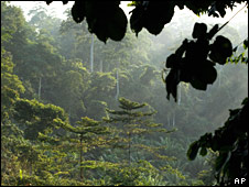 Rainforest in Ghana