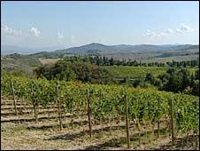 Castello Monte Vibiano Vecchio farm