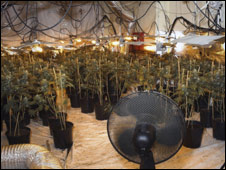 Cannabis factory in Highlands. Pic: Northern Constabulary