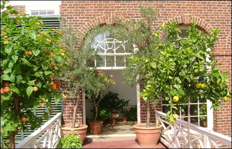 Conservatory with lemon tree