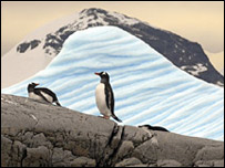 Pingüino sobre roca.