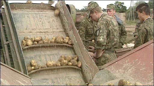Russian potato harvest