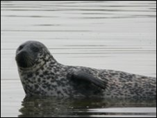 Chichester Harbour Seal