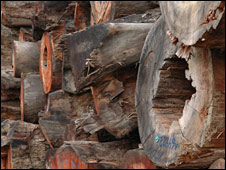 Timber piled up in Brazil