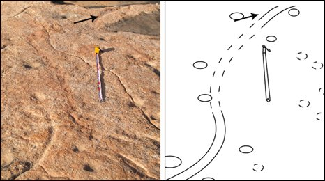 Dinosaur tail marks illustrated by a diabram  (W.Seiler)