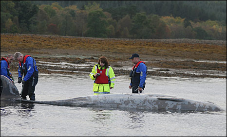 Rescuers with whale