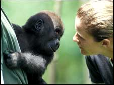 Rachel with Ncarla, a baby western lowland gorilla. Photo courtesy of CWAF