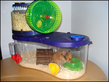 Fudgie the hamster