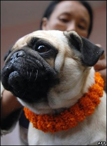 A dog wears a garland of flowers