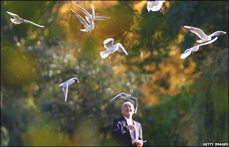 A man feed sea gulls in London's St James Park