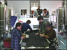 "Grapes processed inside the ""Chais"""