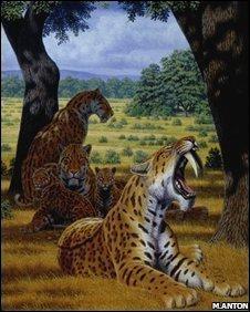 Sabretooth pride