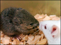 استنساخ فأر من جثة فأر مجمد منذ 16 عاما _45170986_mouse_pa_pnas203i