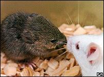 Clones de ratones congelados
