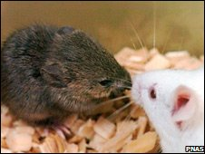 Cloned mouse (left) (Pic: PNAS/PA)
