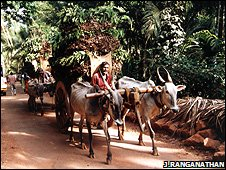A ox-drawn cart full of leaft litter (Image: Jai Ranganathan)