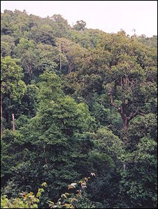 Intact forest (Image: Jai Ranganathan)