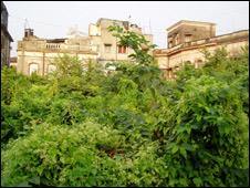 Kolkata cemetery