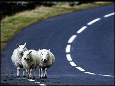 Sheep route (PA)