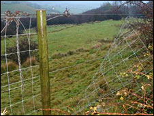 Broken deer enclosure