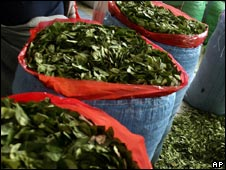 Coca leaves - file image