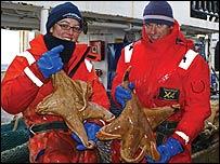 Investigadores con estrellas de mar gigantes (Imagen: Censo de la Vida Marina)