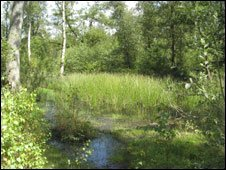Odiham Common in Hampshire [Pic: Open Spaces Society]