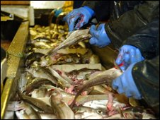 Deckhands gutting fish