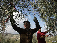 Olive pickers in Greece (file pic)