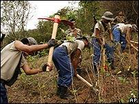 Erradicación de cultivos de coca en Bolivia.
