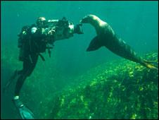 Diver (BBC)