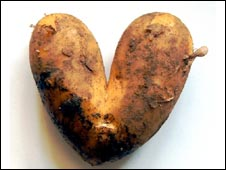 Potato (picture courtesy of Graham Turner)