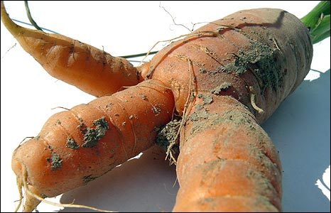 Carrot (picture by Gerd Kortemeyer)