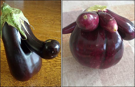 Aubergines (pictures courtesy of Margot Sargent and Tony Mayhew)
