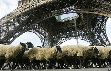 A herd of sheep pass beneath the Eiffel Tower during a farmers' protest in Paris, France