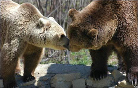 Cristi and Lydia at a bear sanctuary