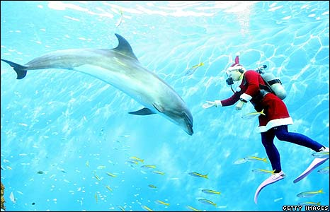 A diver dressed as Santa Claus dives with a white beluga whale in Yokohama, Japan