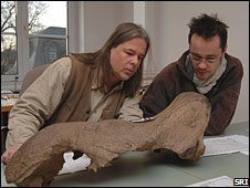 Ralf-Dietrich Kahlke (l) and Frederic Lacombat (r) examine the skull