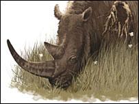 Волосатый носорог
