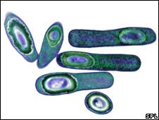 C.diff bacteria